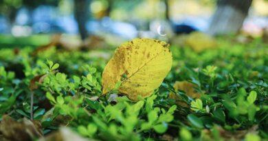 campus, autumn, defoliation-1890986.jpg